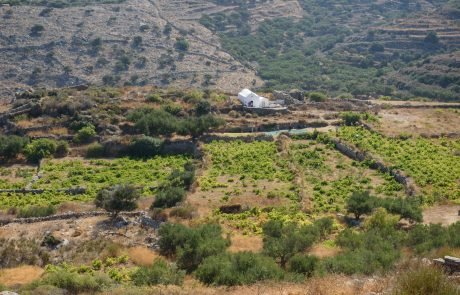 Vineyard - Nature and Geography Amorgos