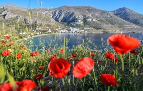 Poppies - Nature and Geography Amorgos