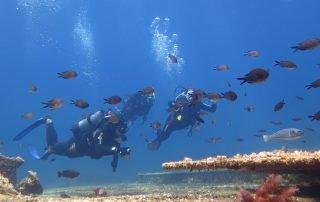 Diving Amorgos