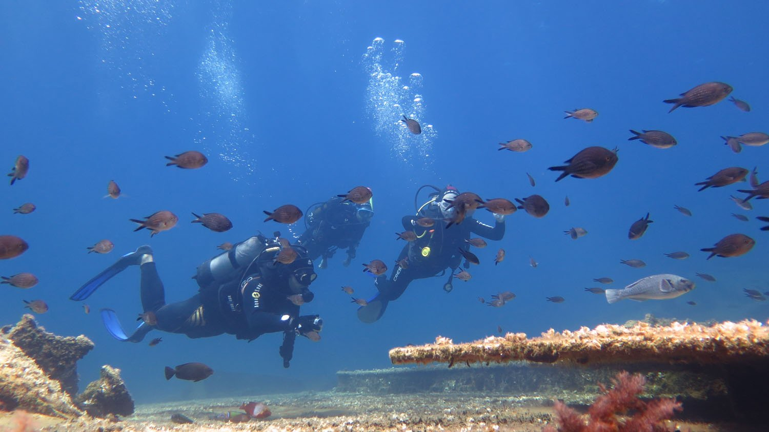 Diving on Amorgos