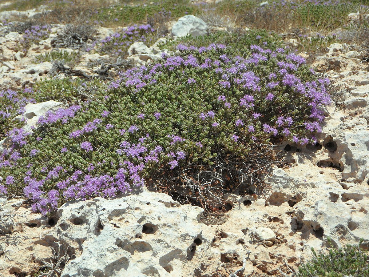 Herbs and Green on Amorgos
